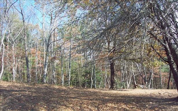 Acreage - Hayesville, NC (photo 4)