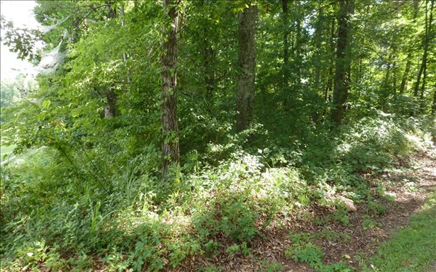 Vacant Lot - Hayesville, NC (photo 3)