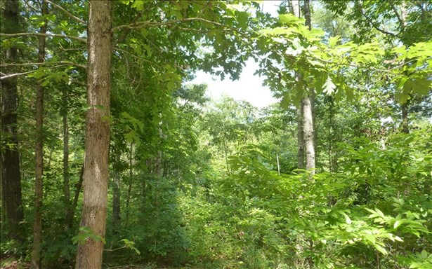 Vacant Lot - Brasstown, NC (photo 2)