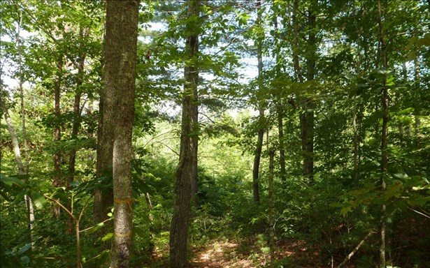 Vacant Lot - Brasstown, NC (photo 4)
