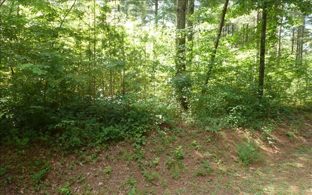 Vacant Lot - Brasstown, NC (photo 3)