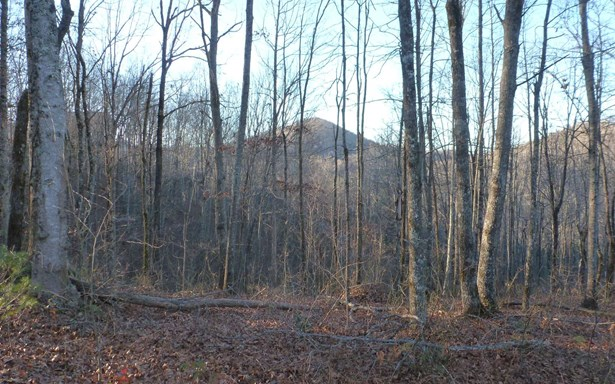 Vacant Lot - Brasstown, NC