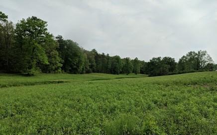 Acreage - Mineral Bluff, GA (photo 1)
