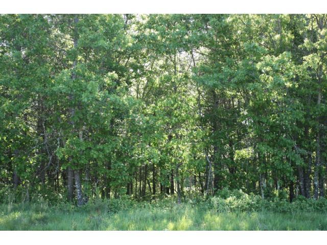 Lot 10 Blk 4 Savannah Oak Drive, Baxter, MN - USA (photo 5)
