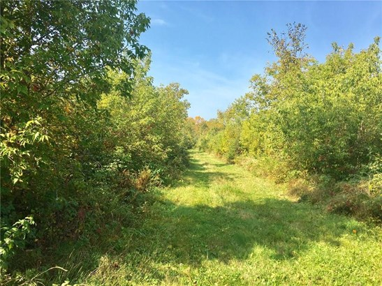 0 105th Ave 77.4 Acres, Cadott, WI - USA (photo 5)