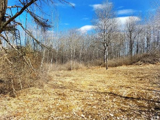 Xxx Scout Trail, Ojibwa, WI - USA (photo 3)