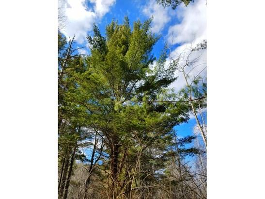 Xxx Scout Trail, Ojibwa, WI - USA (photo 4)