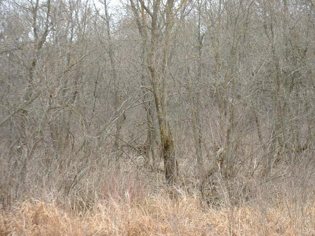 1359 Evergreen Drive, River Falls, WI - USA (photo 2)