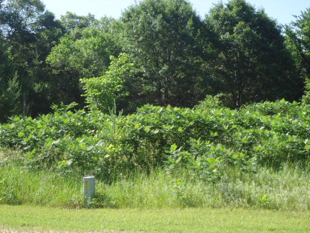 Lot 1 845th Street, Hager City, WI - USA (photo 3)