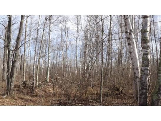 Xxx Forestry, Boray, MN - USA (photo 3)