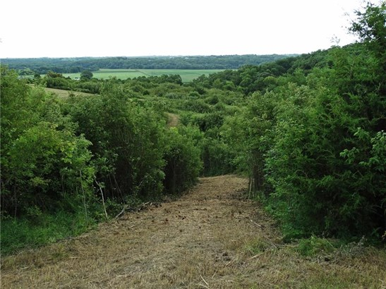 Lane thru trees (photo 5)