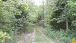 115 Acres Talley Bend Hwy C , Deepwater, MO - USA (photo 1)