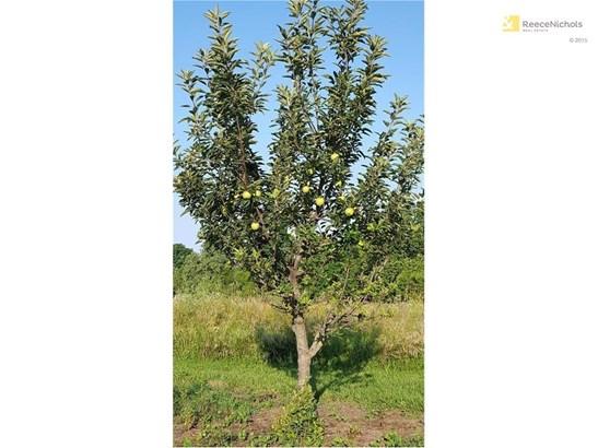 APPLE TREE (photo 5)