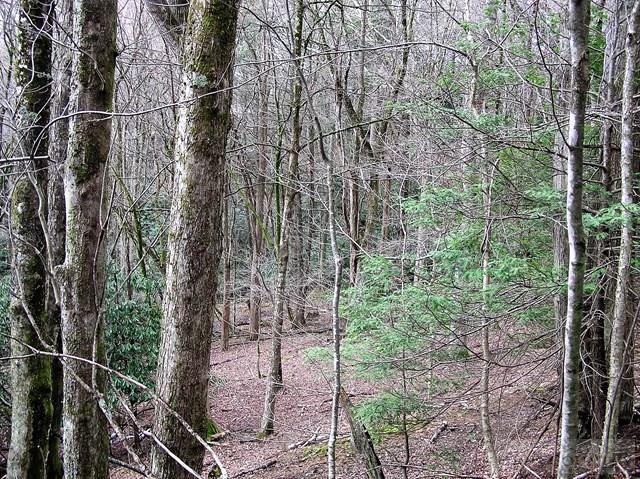 Land - Seven Devils, NC (photo 4)