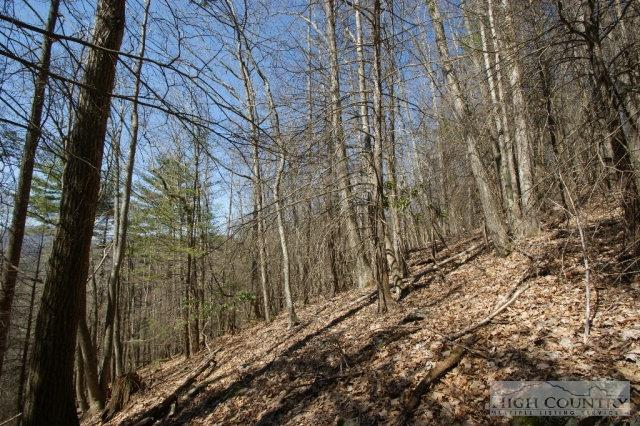 Acreage - Sugar Grove, NC (photo 4)