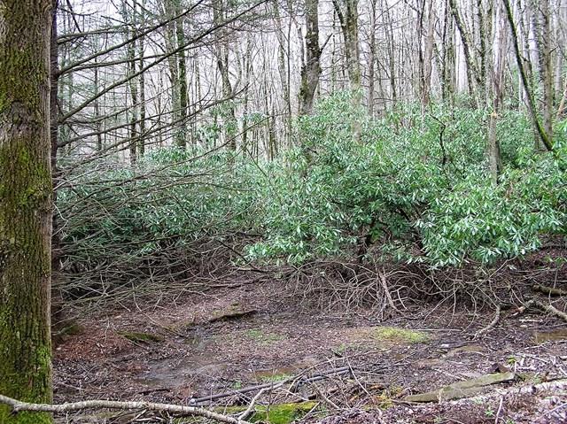 Land - Seven Devils, NC (photo 5)