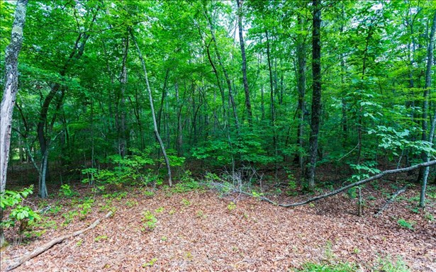 4.9ac Stuart Mountain, Mineral Bluff, GA - USA (photo 4)