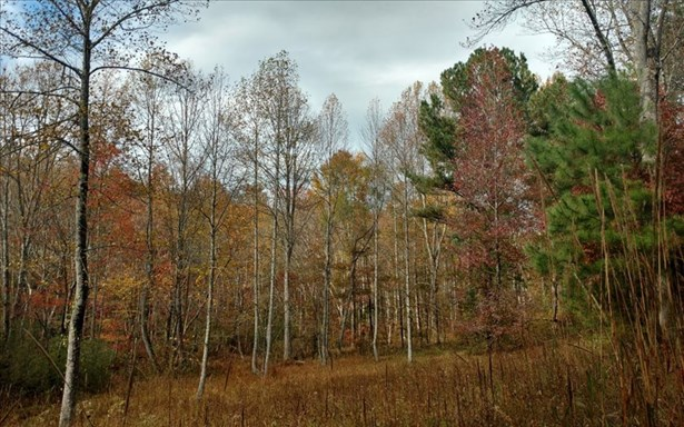 Doublehead Gap, Ellijay, GA - USA (photo 3)