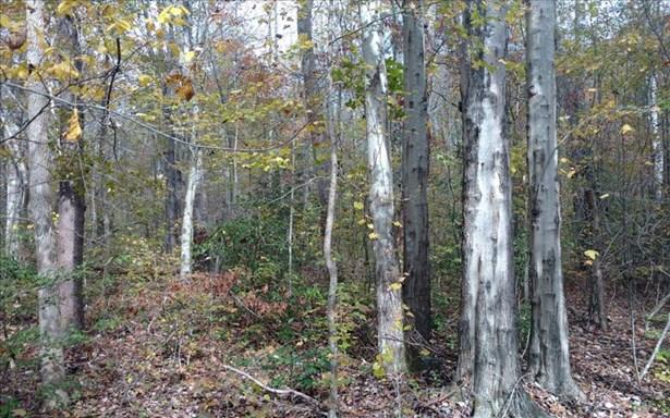 Doublehead Gap, Ellijay, GA - USA (photo 4)