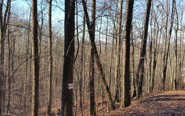 M104 Walnut Mountain, Ellijay, GA - USA (photo 2)