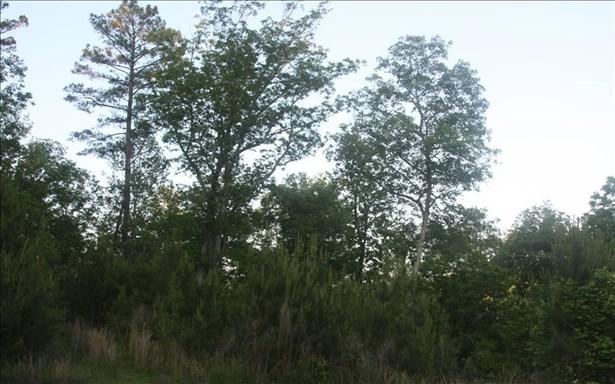 River Ridge, Ellijay, GA - USA (photo 3)