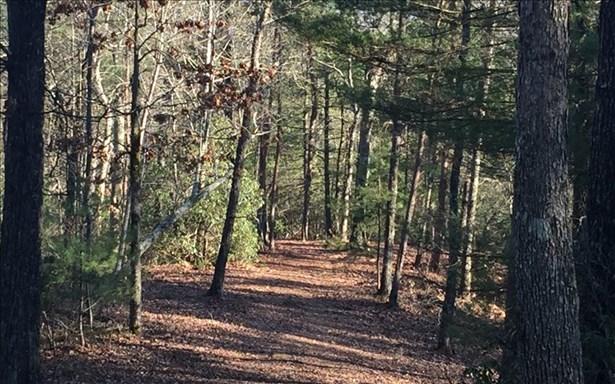 Mountain Laurel Ridg, Mineral Bluff, GA - USA (photo 3)