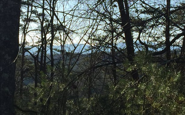 Mountain Laurel Ridg, Mineral Bluff, GA - USA (photo 5)
