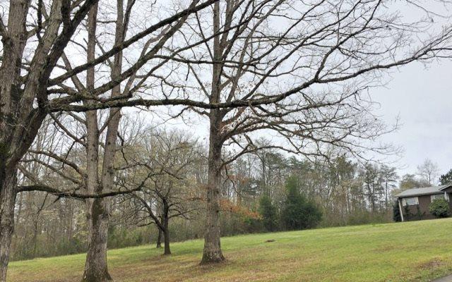 474 Salem Road, Mineral Bluff, GA - USA (photo 2)