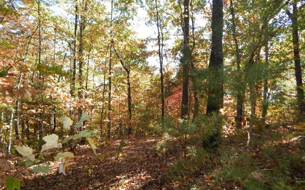 Lot 9 Stuart Mountain, Mineral Bluff, GA - USA (photo 5)