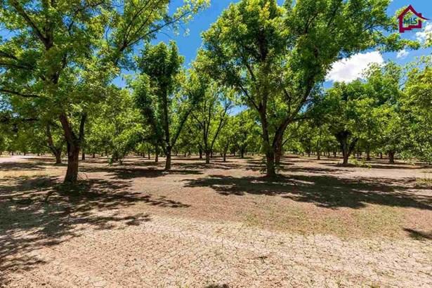 Farm - Las Cruces, NM (photo 3)