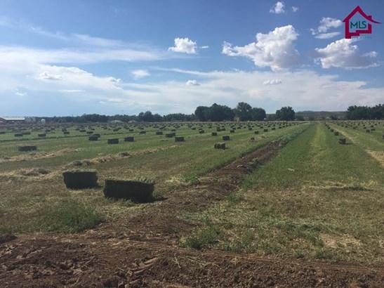 Farms/Ranches - HATCH, NM (photo 5)