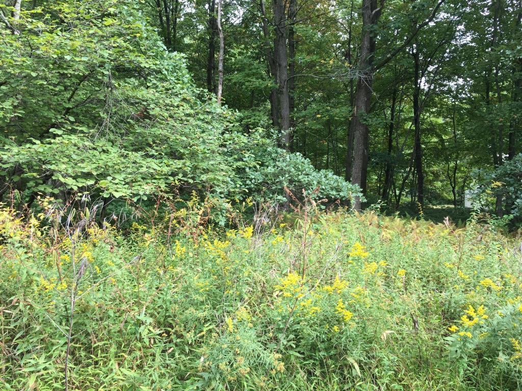 Raw Land - Greeley, PA (photo 5)