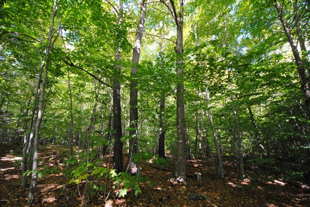 Raw Land - Pleasant Mount, PA (photo 1)