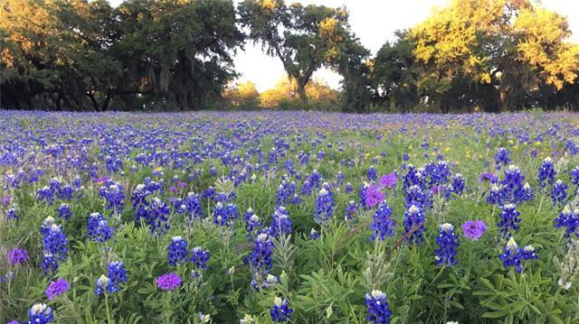House - Spring Branch, TX (photo 1)