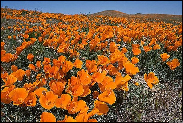 0 Vac/cor Avenue G2/136 Stw, Del Sur, CA - USA (photo 1)