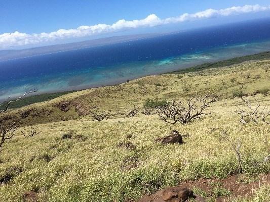 Makolelau-kamalo, Kaunakakai, HI - USA (photo 1)