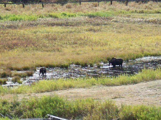 4115 Cedar Creek Rd, Colville, WA - USA (photo 2)