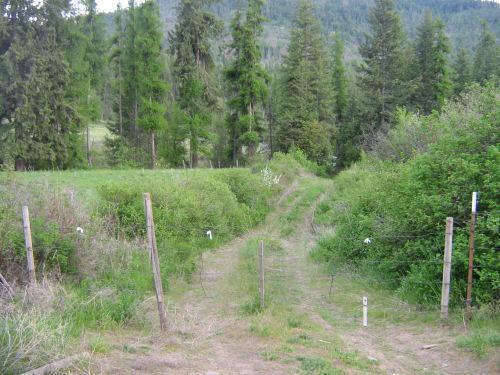 Lot 4 Daisy Mine Rd, Rice, WA - USA (photo 3)