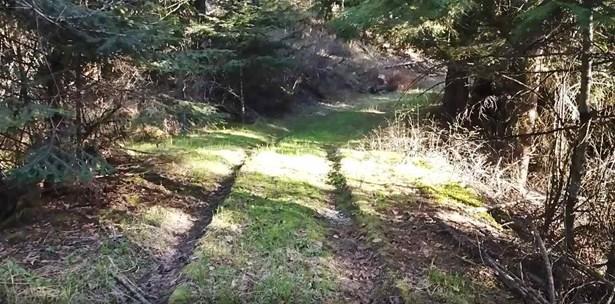 Xxx Mt Spokane Park Dr, Mead, WA - USA (photo 1)
