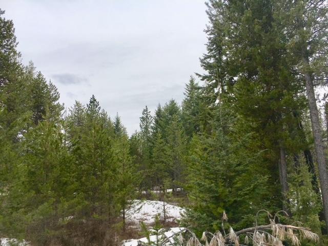 Madison St, Spirit Lake, ID - USA (photo 3)