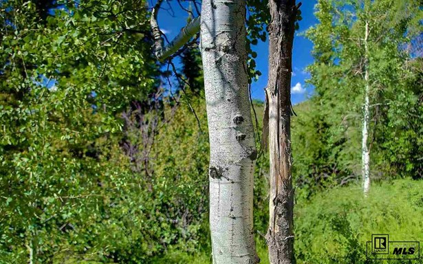 22975 Snowbird Way, Oak Creek, CO - USA (photo 5)