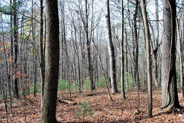 Land (Acreage), Lots/Land/Farm - Check, VA (photo 3)