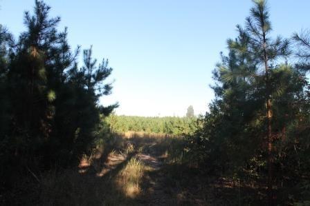 Land/Lots - Meredithville, VA (photo 2)