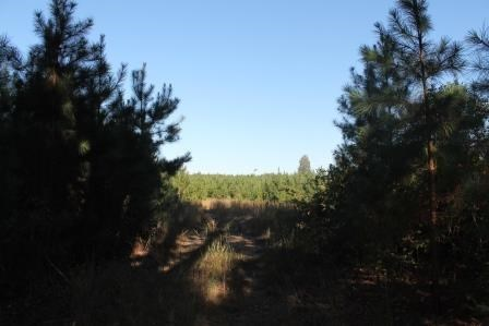 Land/Lots - Meredithville, VA (photo 3)