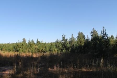 Land/Lots - Meredithville, VA (photo 4)