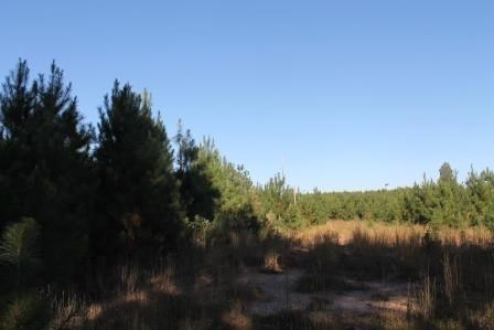 Land/Lots - Meredithville, VA (photo 5)