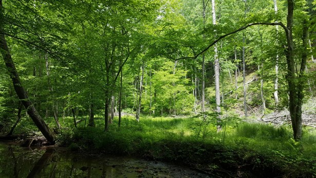 Land (Acreage), Lots/Land/Farm - Bassett, VA (photo 1)