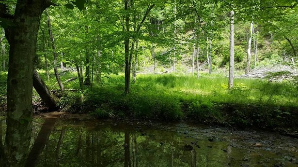 Land (Acreage), Lots/Land/Farm - Bassett, VA (photo 5)