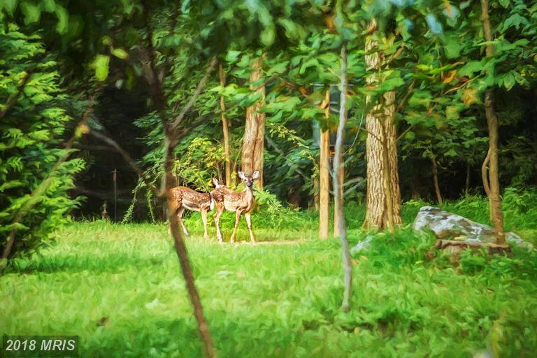 Lot-Land - SHEPHERDSTOWN, WV (photo 4)