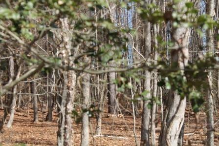 Land/Lots - Ebony, VA (photo 5)